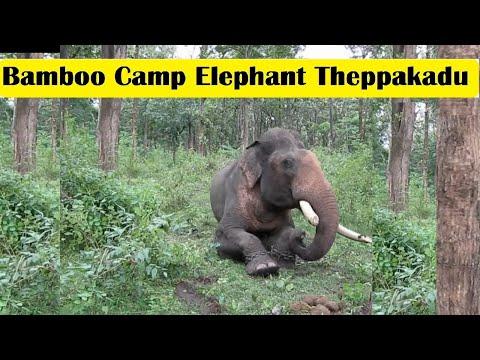 camp elephant