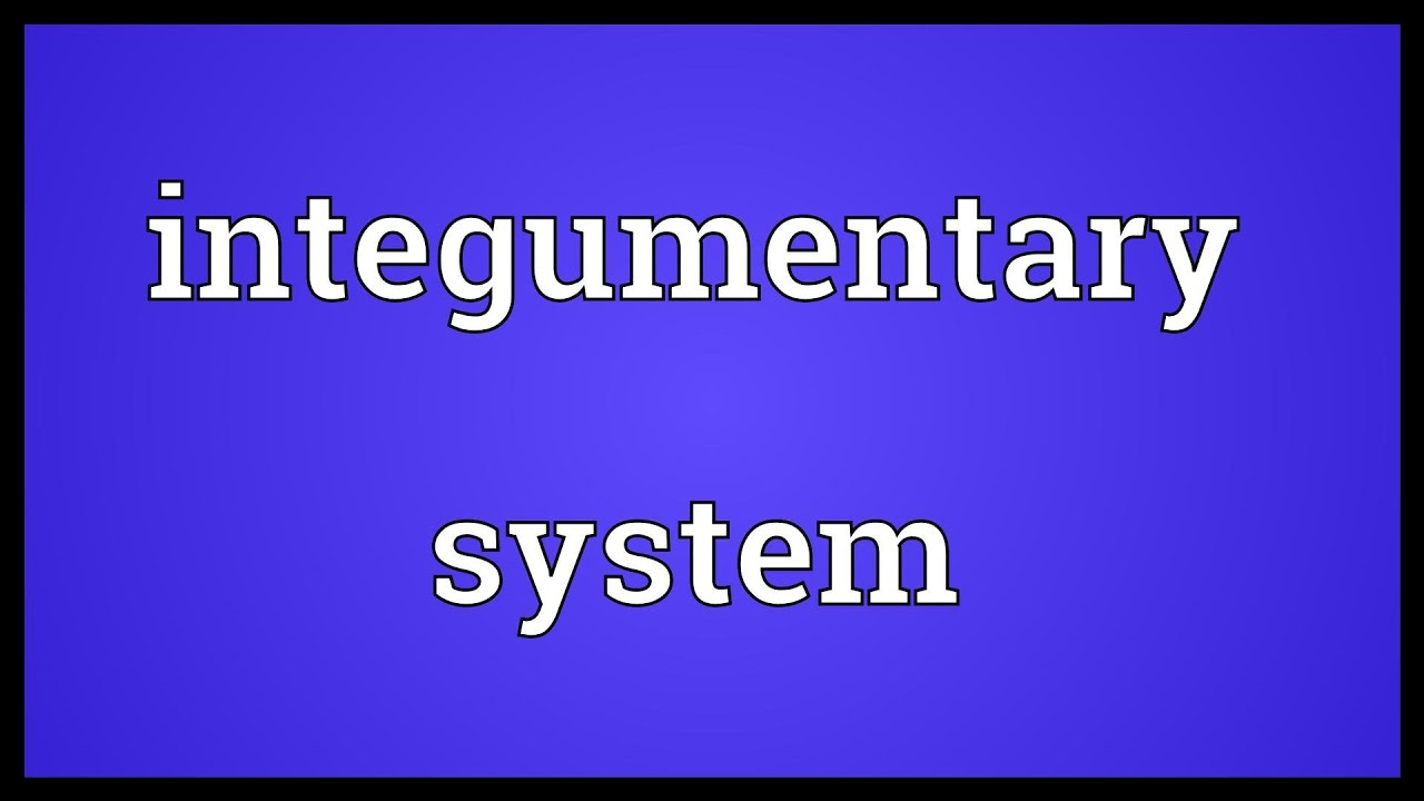 Integumentary System Meaning Youtube