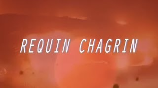 Requin Chagrin - Rc
