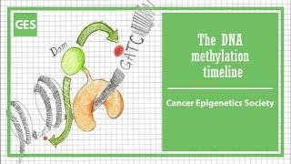 DNA methylation timeline