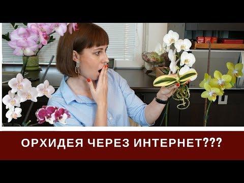 Покупка Орхидей Через Интернет: Да или Нет?