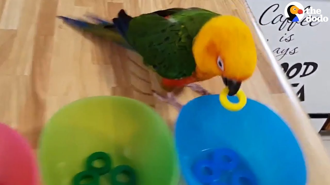 Smart Parrot Shows Off All His Tricks | The Dodo