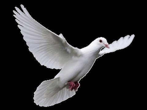 funeral white dove release southern california 714 903 6599 youtube