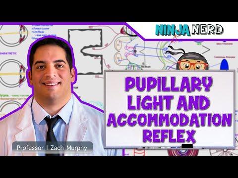 Special Senses | Pupillary Light & Accommodation Reflex