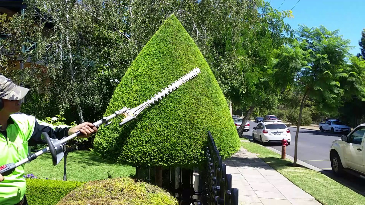 Topiary Hedge Trim Garden Maintenance Youtube Link To A