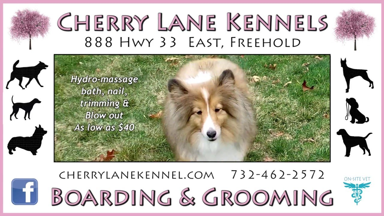Cherry Lane Kennels Grooming TV Commercial - YouTube