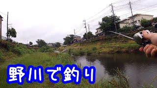 野川で釣り【東京】