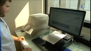 Angers : à la recherche de la bactérie tueuse, Xylella Fastidiosa