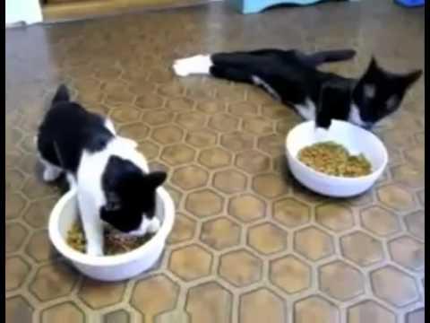 Hai con mèo SAY RƯỢU @_@