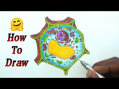 How To Draw plant Cell Step by step with function for ...