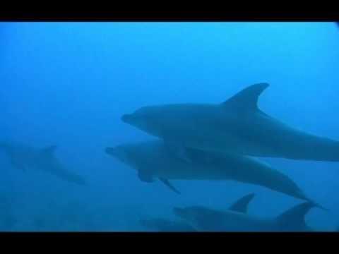 Plongée, Mer Rouge, Dauphin, Animaux, Cétacé, récif, Goélette, Voyage, cpsfrv, Diving, Red Sea, Dolphin