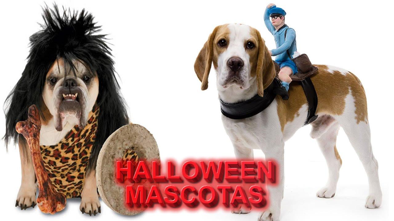 54 Ideas de Disfraces Caseros para Halloween » 【TOP 2019】