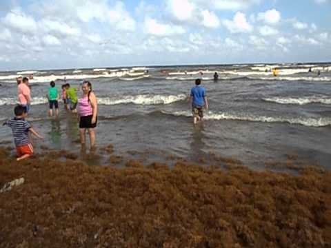 The beach a water pretty galveston tx beach hot day youtube for Free fishing day texas
