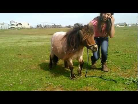 Riding a miniature horse