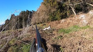 English pointer 18 months Even if the dog makes the point a success...