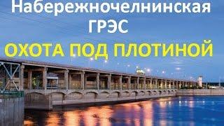 Охота под плотиной ГЭС