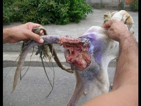 Rescatan a perro abandonado en ltimas condiciones  YouTube