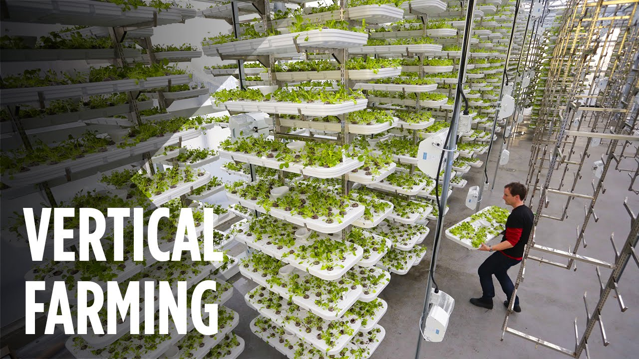 Vertical Farming: The farm of the future?