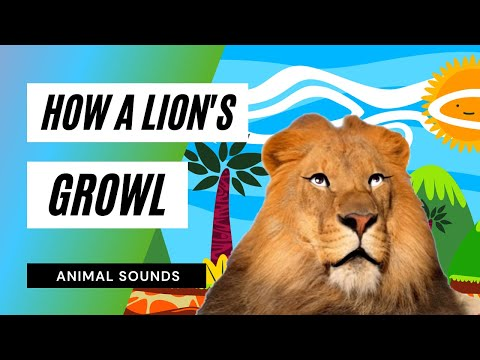 The Animal Sounds: Lion Growl - Sound Effect - Animation