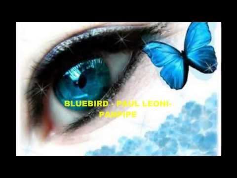 BLUEBIRD  ❤♫❤   PANPIPE - Album Flight Of Fancy