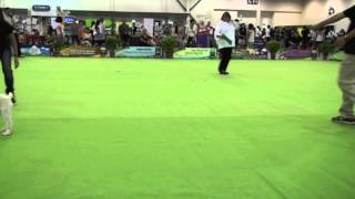 Discover Dogs Singapore 2013  - Obedience Trials