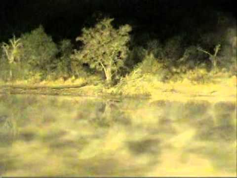 First Live Hyena Kill - Djuma Dam Cam - Aug 3, 2011