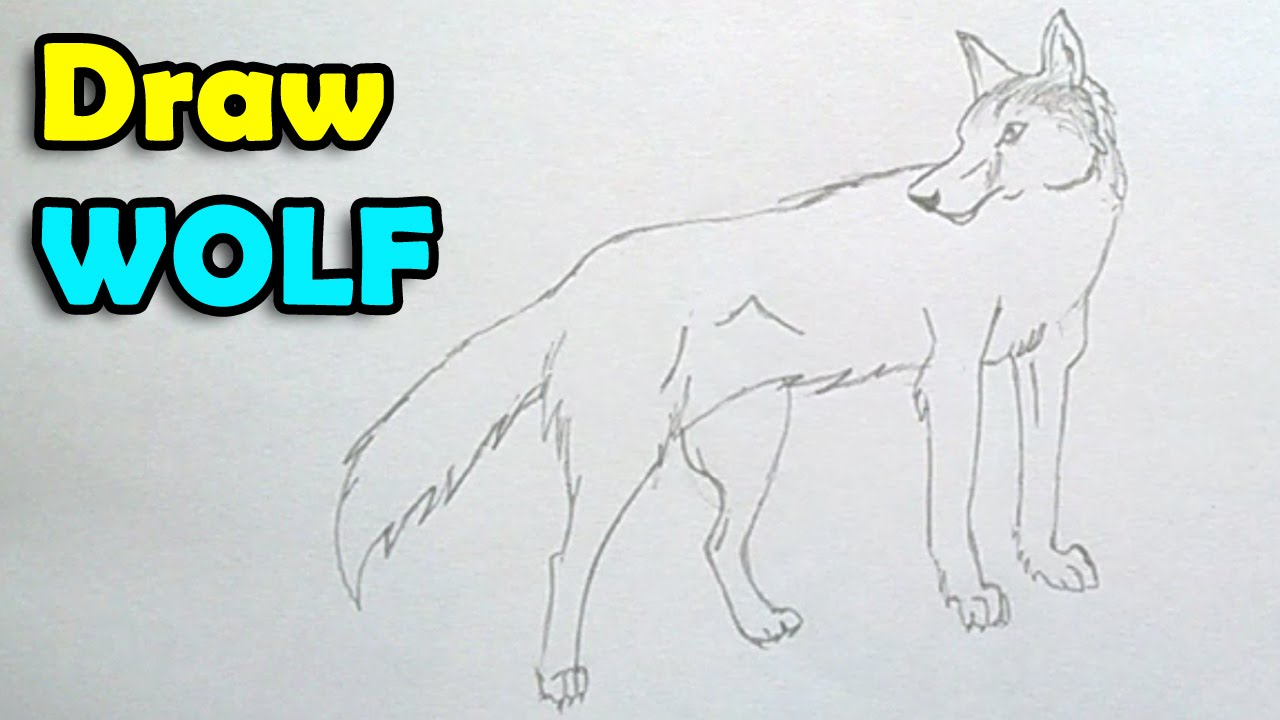 how to draw a wolf step by step easy for kids youtube