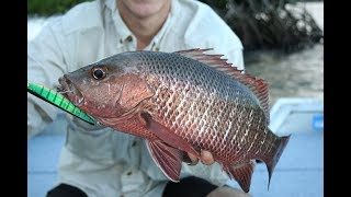 Top 5 lure to use for chasing mangrove jacks!!