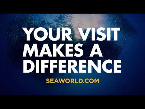Park to Planet™ – Your Visit Makes a Difference | SeaWorld® Parks & Entertainment