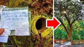 У дерева в Германии есть собственный адрес, и люди пишут ему за помощью