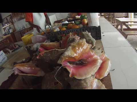 Opening a Conch Shell Atlantis Resort Bahamas Caribbean Islands On GoPro White