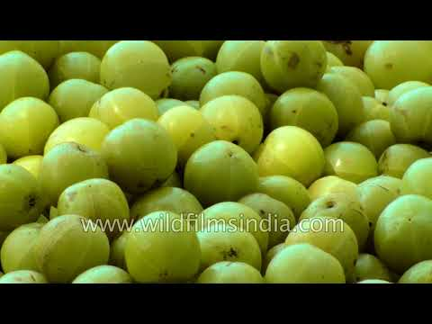 Medicinal plants, fruit and herbs of India    Part 1