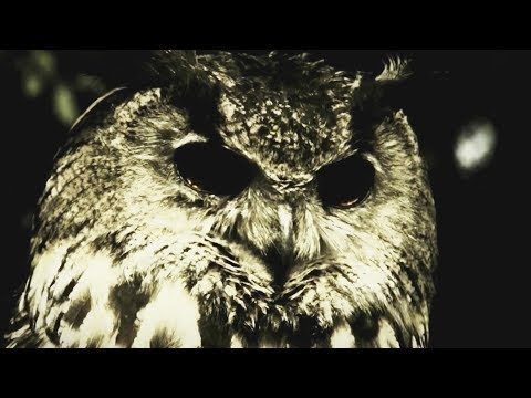 In The Woods - Yearning the seeds of a new dimension (  The Owl Video )