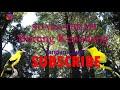 Suara Terapi Burung Kepodang  Mp3 - Mp4 Download