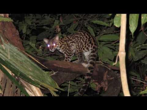 Çok İlginç Avlanma Tekniğine Sahip 5 Hayvan