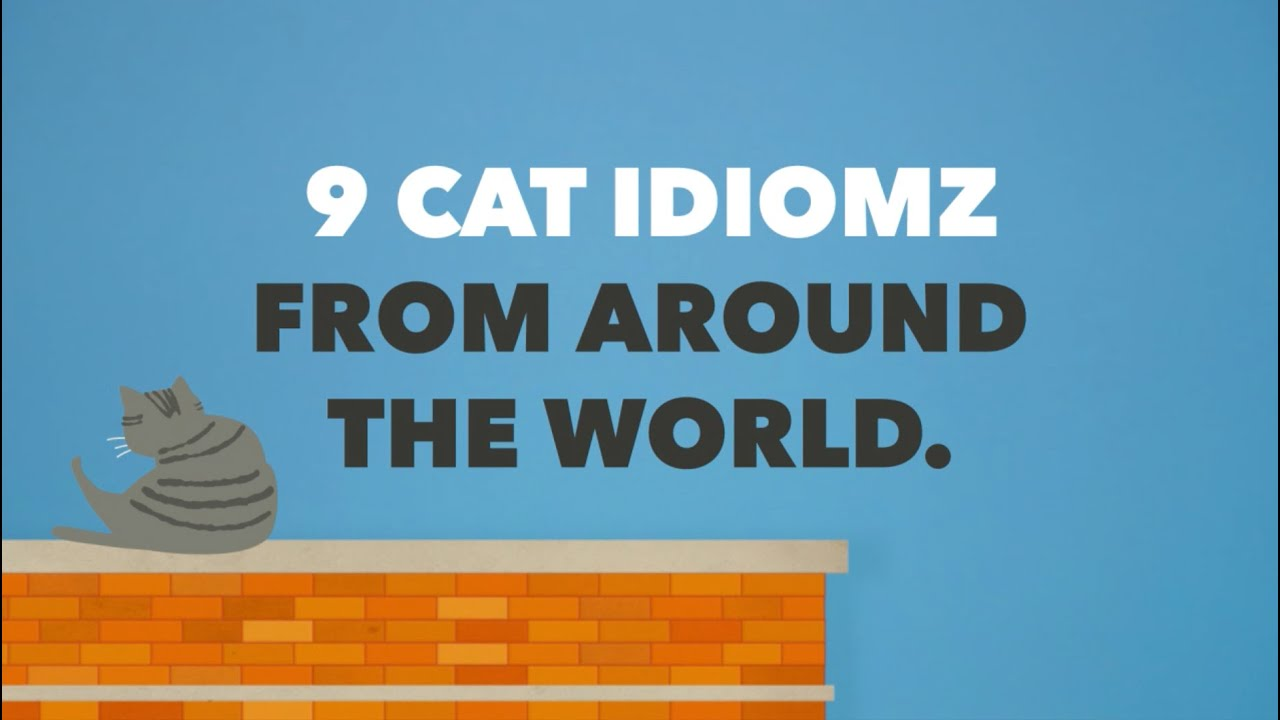 9 Cat Idioms From 11 Different Languages | Babbel Magazine