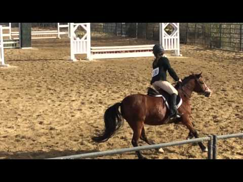 2' Class - Equitation Open Class. Excellent fly lead changes.