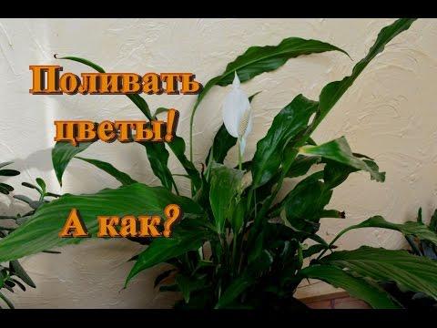 Комнатные цветы и полив! Важно знать!