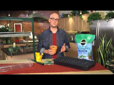 How to Start Seeds Indoors With Miracle-Gro Seed Starting Potting Mix