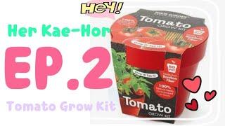 Gambar cover Her Kae-Hor   เห่อแกะห่อ EP.2 Tomato Grow Kit from Paris Garden - Urban Farming.🍅
