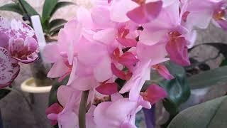 Обзор цветущих  орхидей! 🤩 1часть🤩
