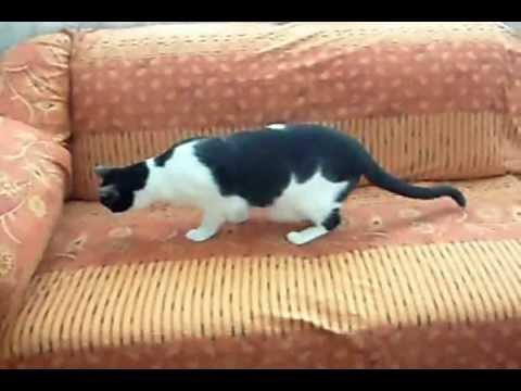Como hacer un forro rapido para tu sala youtube - Como confeccionar cojines para sofas ...