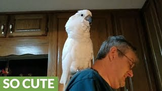 Cockatoo serenades owner by singing 'I love you'