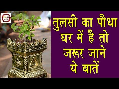 तुलसी का पौधा  घर में है तो, जरूर जाने ये बातें...!!! | How to worship Tulsi plant at home. Mp3
