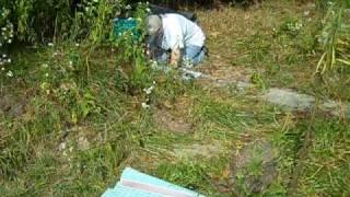 Terra Doing Senior Earthdog