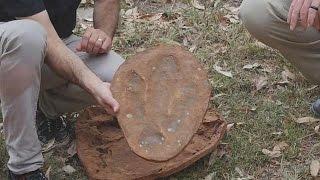 Dünyanın en büyük dinazor ayak izi Avustralya'da bulundu