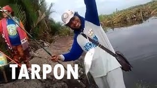 Semi casting Tarpon Avec Petit Ballast utilisant Bait Worms #Fishing Mania