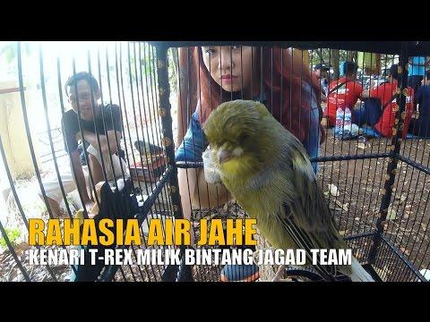 Download Lagu DUNIA HOBI : Ramuan Air Jahe Bikin Kenari T-Rex Ngedur Gacor Di Kapolda Lampung Cup