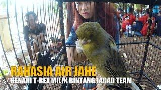DUNIA HOBI : Ramuan Air Jahe Bikin Kenari T-Rex Ngedur Gacor Di Kapolda Lampung Cup