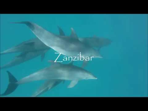 Zanzibar - African Impact (Marine Project)